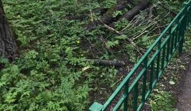 Сломанные ветви деревьев вывезли с Молодцова