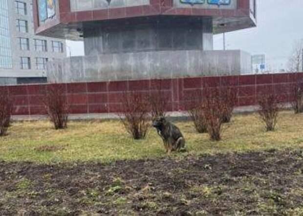 Сахалинские госавтоинспекторы помогли бездомной собаке перейти дорогу