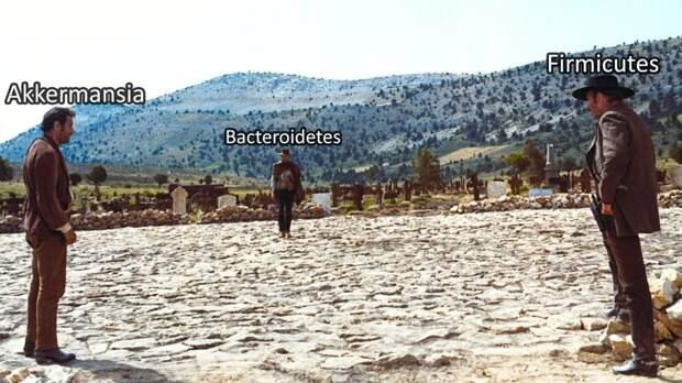 Бактериальные войны: как похудеть с точки зрения науки