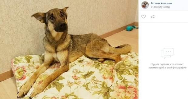 Жительница Коптева ищет дом для приютской собаки Розы с несчастной судьбой