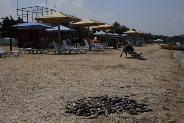 От крымской жары дохнет даже рыба