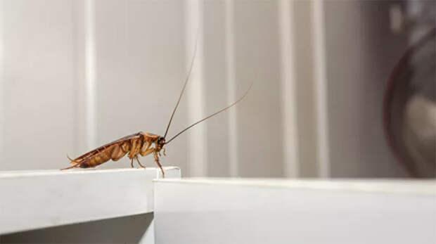 Американкам предложили назвать таракана в честь бывшего парня