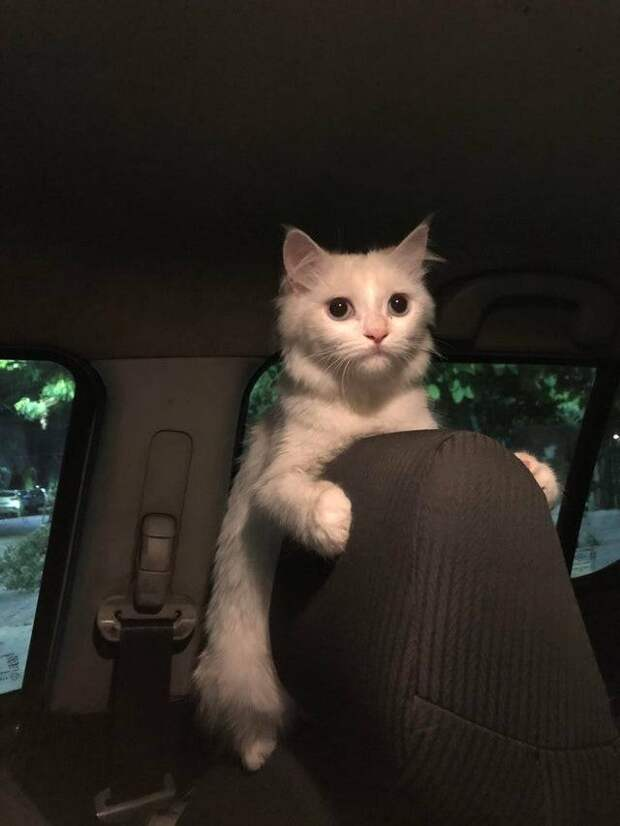 Смешные коты и их причуды: 12 снимков