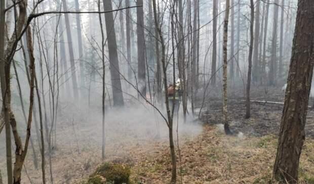 Почти 900 гектаров леса сгорело вСвердловской области