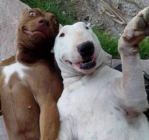 Животные тоже любят селфи