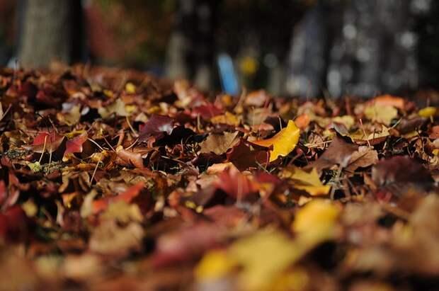Куча опавшей листвы заняла парковку у дома на Волгоградке