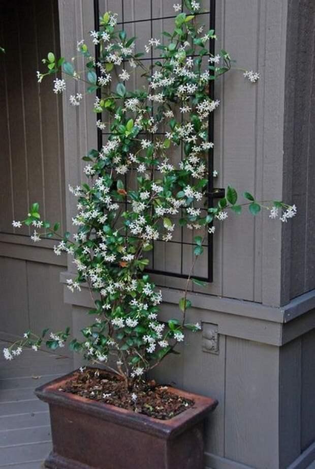 25 ярких идей для вашего красивого сада