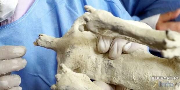 Трёхпалые мумии Перу были убиты хищником (видео)