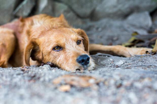 Никто уже не надеялся, что 14-летний пес, много лет проживший в приюте, обретет хозяев. Но чудо случилось!