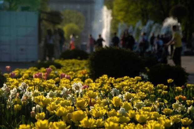 Собянин: в этом году Москву украсят 54 миллиона цветов