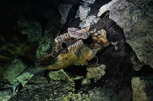 Фотопутешествие в подводную пещеру майя