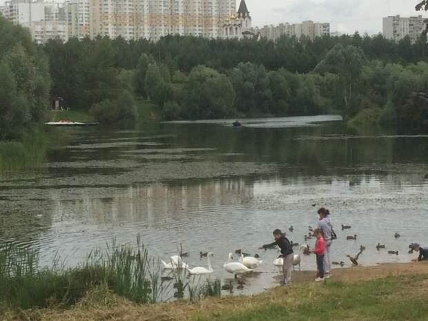 Фото дня: сказочные гуси-лебеди