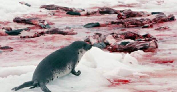 Россия закрыла Баренцево море для норвежцев или «вторая Тюленья война»