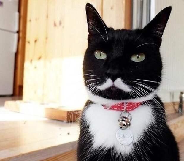 Необычный окрас у котиков животные, клево, коты