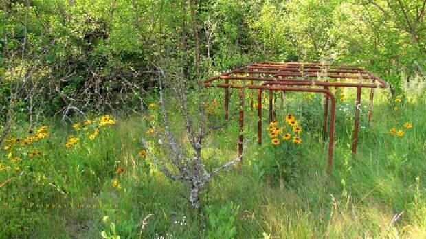 chnpp17 Оживающий Чернобыль