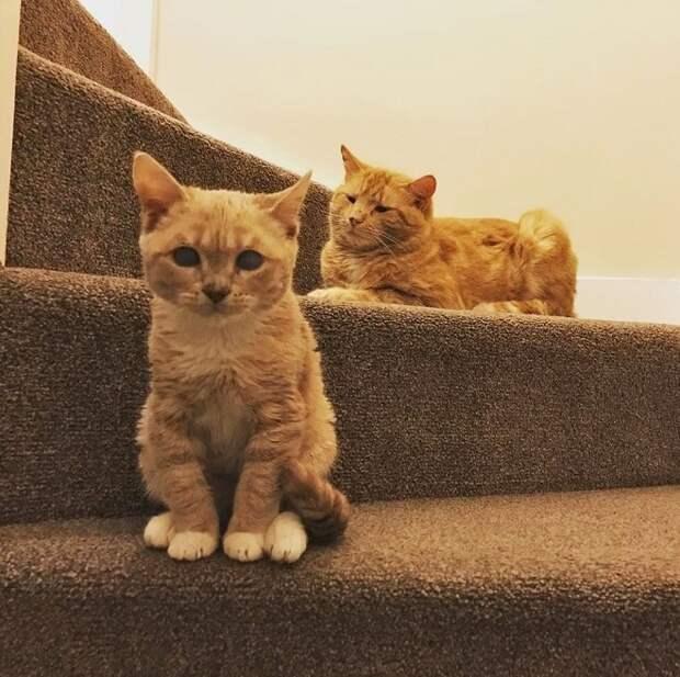 Коты на ступеньках