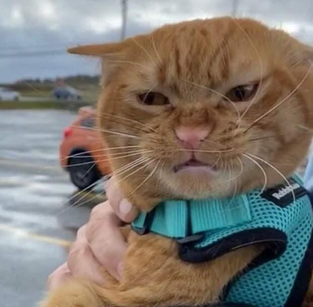 Тыковка – котик, который не любит ветер