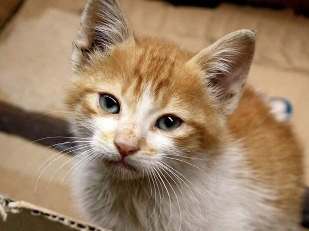 В Госдуме предложили штрафовать на 30 тысяч за выброшенных животных
