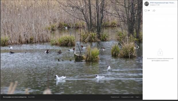 Экологи «Лосиного острова» начали учет птиц