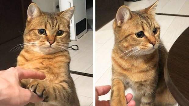 12 котов, все эмоции которых написаны у них на мордашке