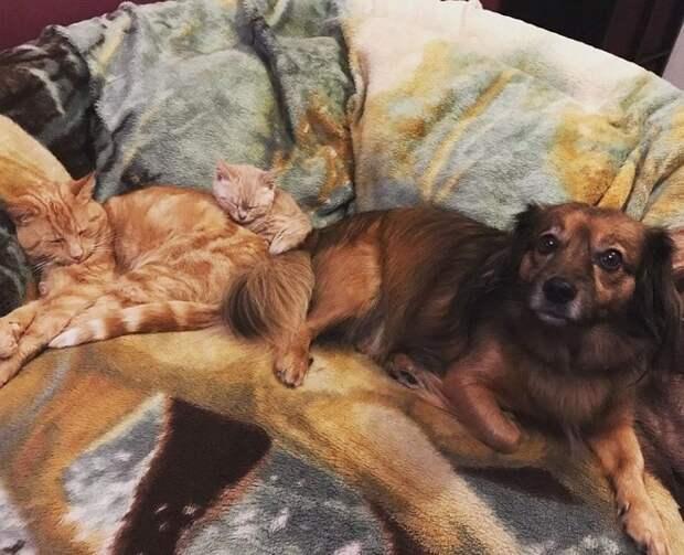 Кошка котенок и собака