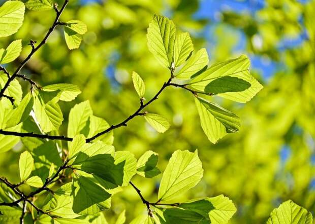 На Дубнинской провели санитарную обрезку деревьев