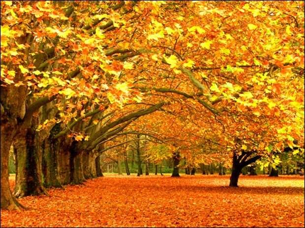 НАСТРОЙ ДНЯ. Цветная осень - вечер года