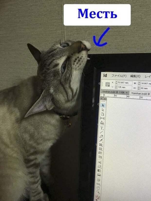 Японец показал, как он защищает компьютер от своей кошки животные, забавно, компьютер, кот, место, юмор, япония