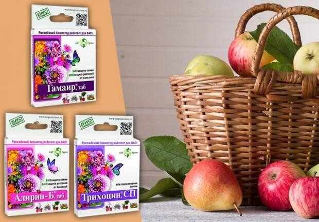 Чем обработать яблони и груши весной и летом