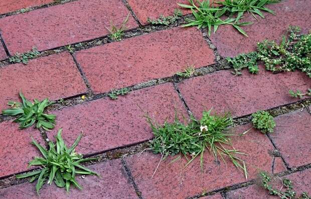 Простой способ, который позволит избавиться от сорняков между тротуарной плиткой