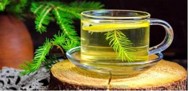 Целебные рецепты: напитки из хвои для здоровья и бодрости