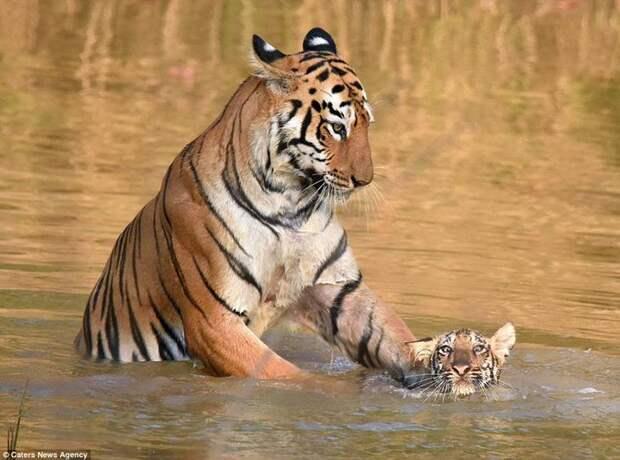 Мать моет сына