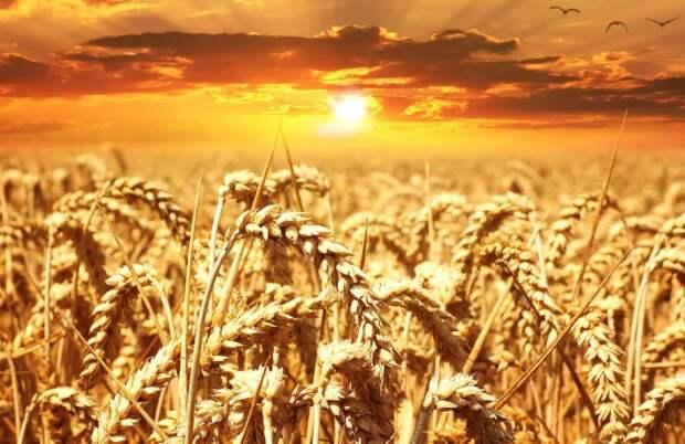 The National Interest: Россия может использовать зерновые в качестве политического оружия
