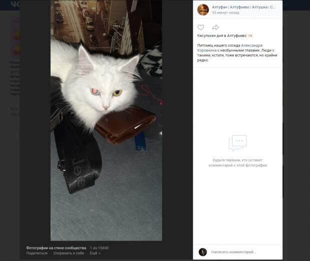 Фото дня: у кота из Алтуфьева разноцветные глаза