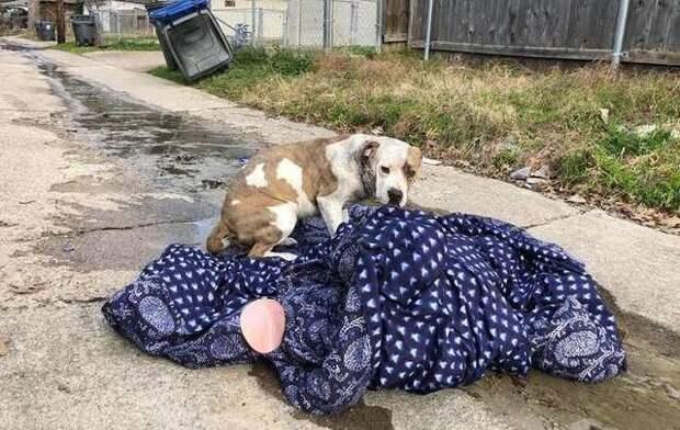 Собака, брошенная хозяевами, не хотела оставлять свое одеяло