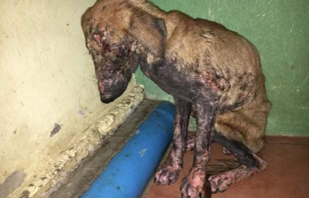 Преображение из страшной собаки с дырой на морде в здорового пса