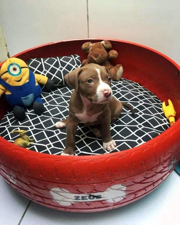 Лежанка для маленькой собачки. | Фото: ШколаЖизни.ру.