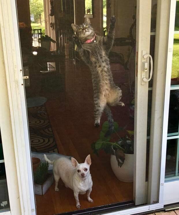 2. Покоритель вершин животные, кошки, мило, питомцы, подборка, прикол, смешные животные, собаки, фото