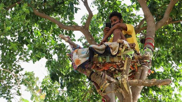 Житель Индии заболел COVID-19 и устроил самоизоляцию на дереве