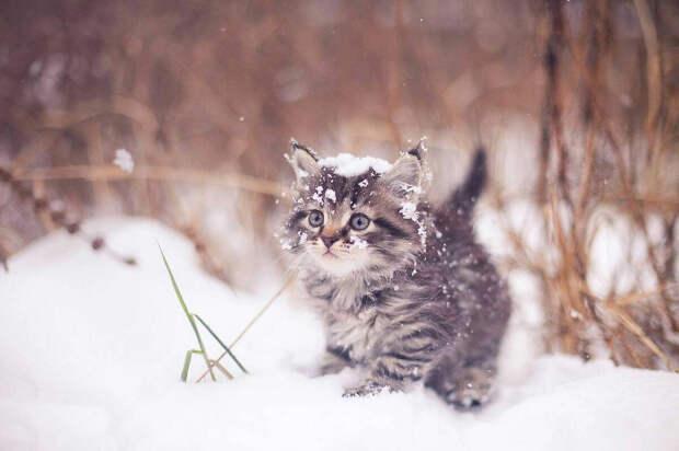 Умирающий от мороза котенок и бабушкина икона. История про простые совпадения или что-то большее?