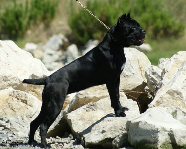 Огромный черный пес летел на нас, рыча и брызгая слюной