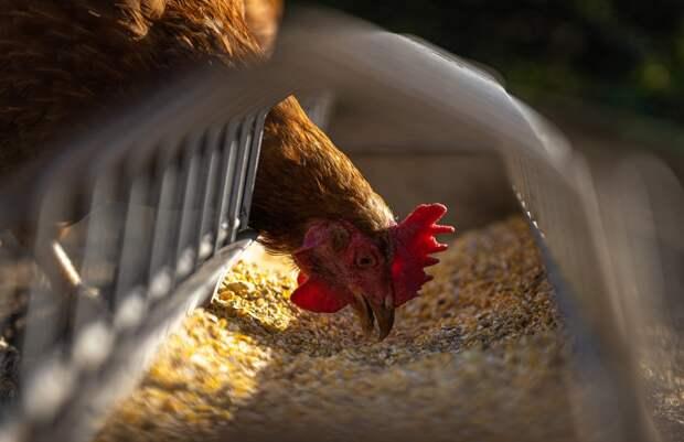 Птицефабрика в Удмуртии сливала отходы животноводства вблизи жилых домов