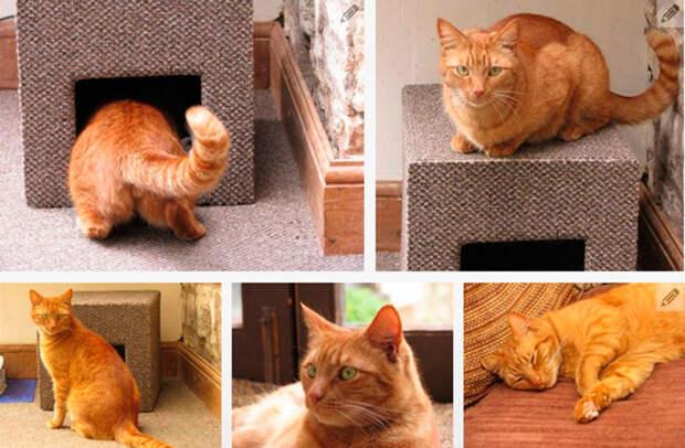 10 способов угодить любимому пушистику – делаем домик для кошки своими руками (1/2)