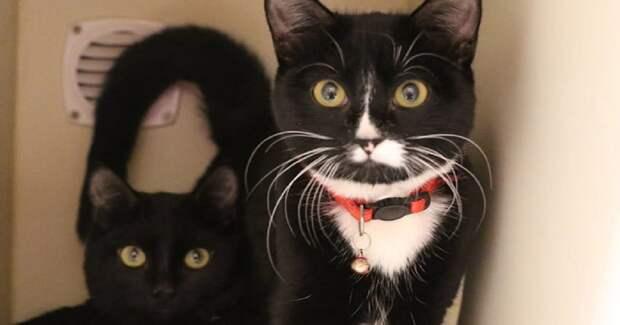 Испуганные глаза выглянули из коробки: там сидели брошенные котишки…
