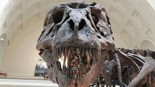 Палеонтологи открыли новый вид древнейших динозавров