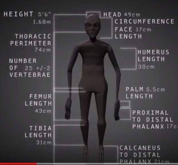 Пропорции тела мумии археологи, в мире, люди, мумия, находка, пришелец, раскопки