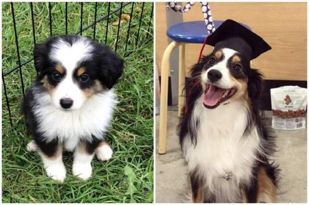 8 примеров, когда крошечные щенки выросли так, что их не узнать