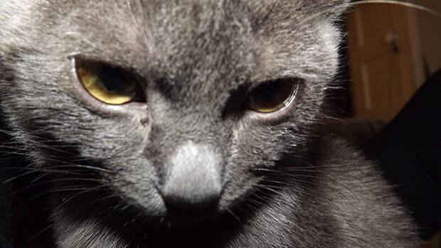 Кошка явно пыталась нам что-то сказать: носилась взад-вперед и кусала всех за ноги, но мы её игнорировали