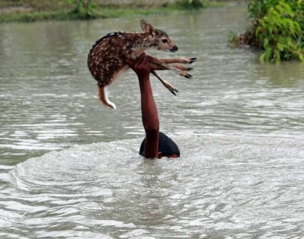 Храбрый мальчик рисковал собственной жизнью, чтобы спасти олененка