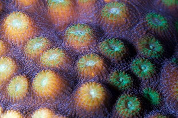 Corals07 Макрофотографии кораллов